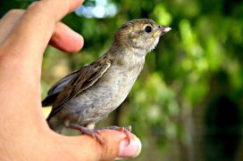 sparrow-in-hand